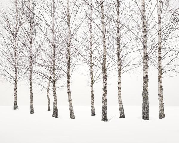 Uwe Langmann, Winter Birches 2021
